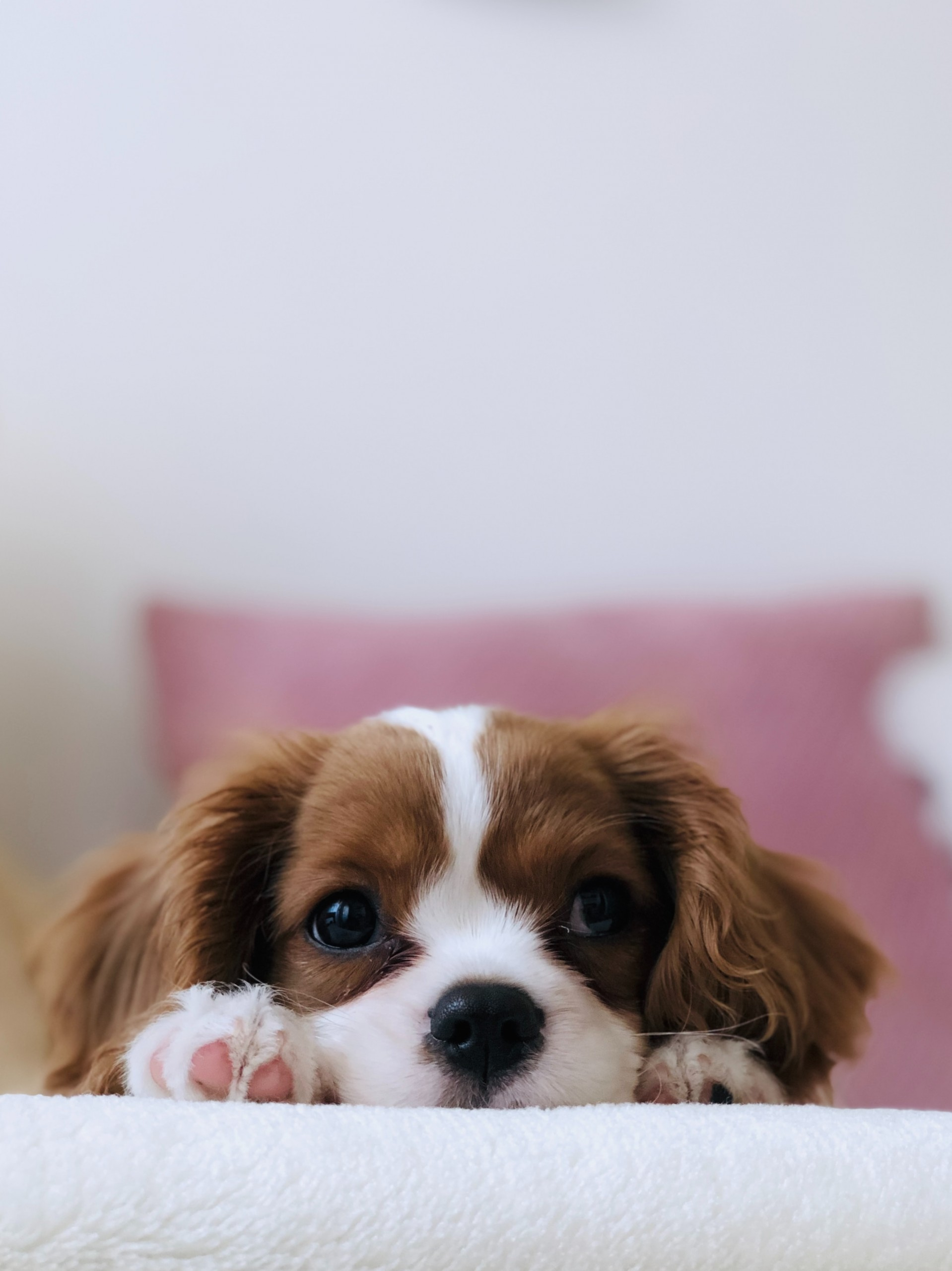 A puppy is not just for Christmas: choosing the perfect family dog
